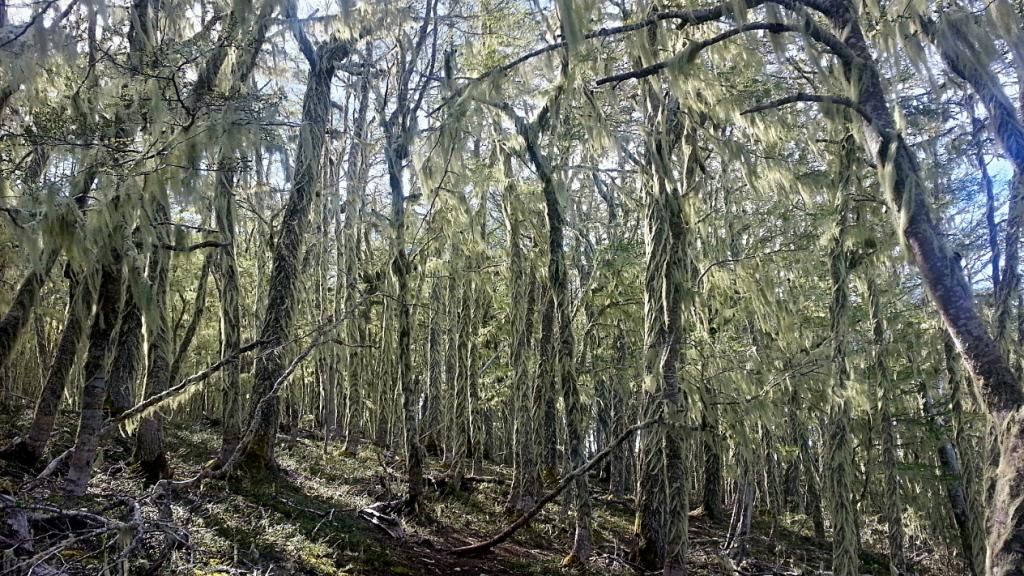 Bosque del Mackay